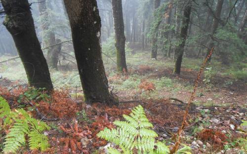 Δάσος στη διαδρομή από τα Επινιανά προς την Αγραπιδιά